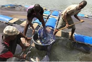 Crece el impulso global para acabar con la pesca ilegal