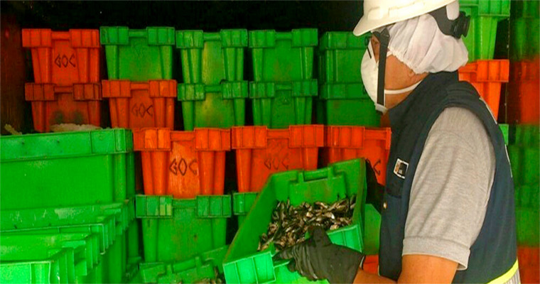 Ministerio de la Producción decomisa más de 18 toneladas de anchoveta provenientes de pesca ilegal en Chimbote